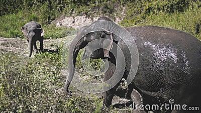 Sanctuaire asiatique pour éléphants thaïlande conservation banque de vidéos