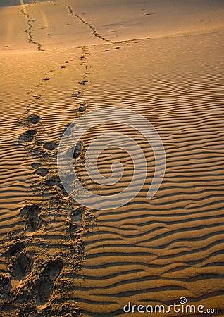 Free Sand Royalty Free Stock Photos - 2110488