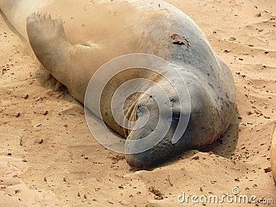 Sand bath seal style