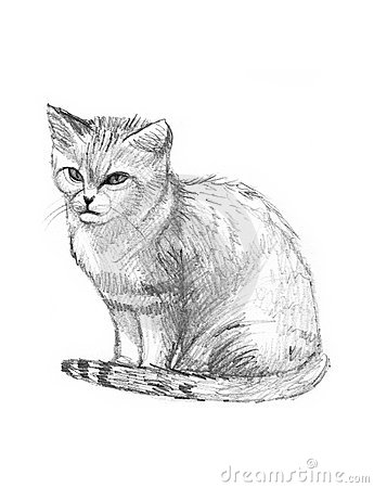 Sand Cat Drawing Sketch Royalty Free Stock Photo Image
