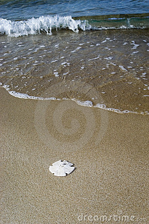 Sand Dollar on Beach