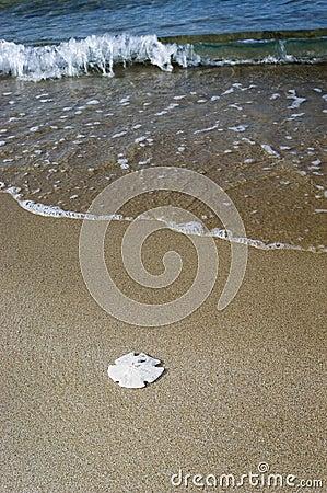 Free Sand Dollar On Beach Royalty Free Stock Photography - 570627