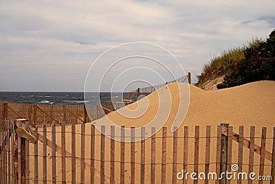 Sand dune on Cape Cod