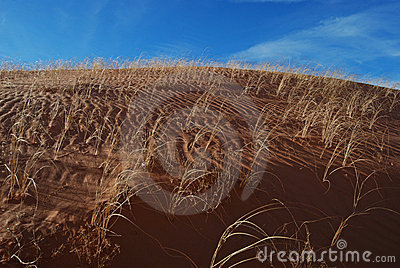 Sand Dune Grass Ripples