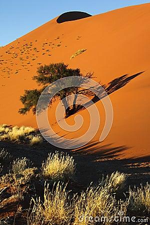 Free Sand Dune - Namib Desert - Sossusvlei - Namibia Royalty Free Stock Images - 22570919
