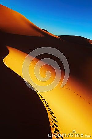 Sand dune sunrise, Sahara Desert, Algeria