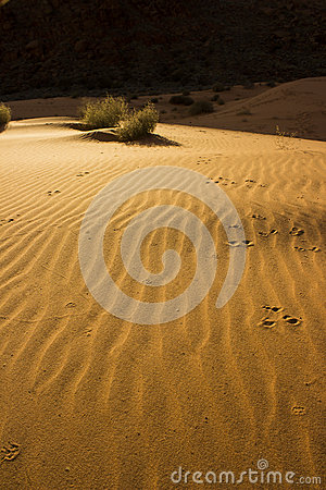 Free Sand Dunes At Snow Canyon Royalty Free Stock Photography - 52679107