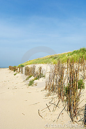 Sand dunes at the beach