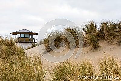 Sand dunes and coastal grasses