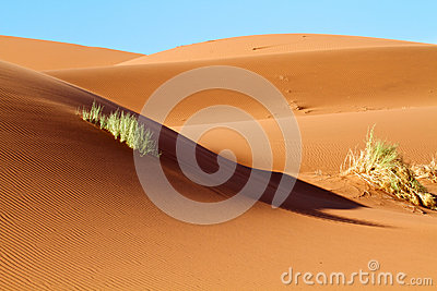 Sand Dunes of the Namibian Desert