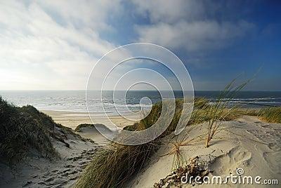 Sand dunes and ocean