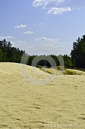 Sand-dunes are in a pine-wood.