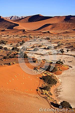 Sand Dunes - Sossusvlie - Namibia