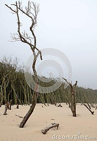 Sand erosion process