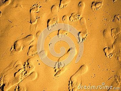 Sand feet