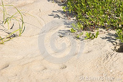Sand and Grass