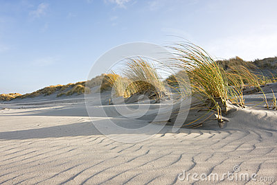 Sand ripples in the dunes