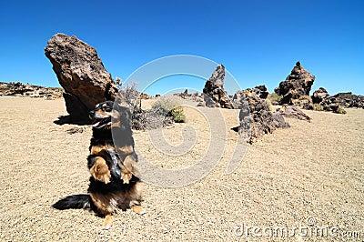 Sand and Rocks Desert