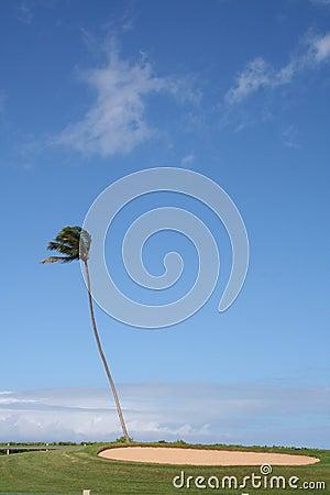 Sand Trap on Hawaiian Golf Course