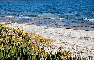 Sand vegetation