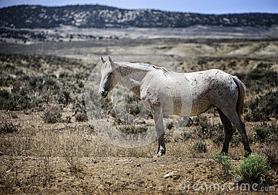 wild horse singles Join us in the ovations live showroom ( ) theatre at wild horse pass hotel & casino (.
