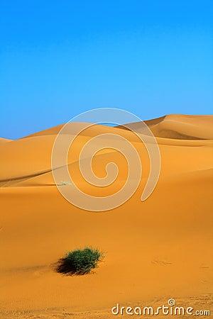 Sanddünen und ein einsamer Büschel des Grases