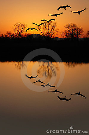 Free Sandhill Cranes At Sunset Royalty Free Stock Photos - 2510398