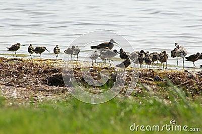 Sandpiper Gathering