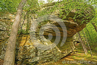 Sandstone Bluff in a Deciduous Forest