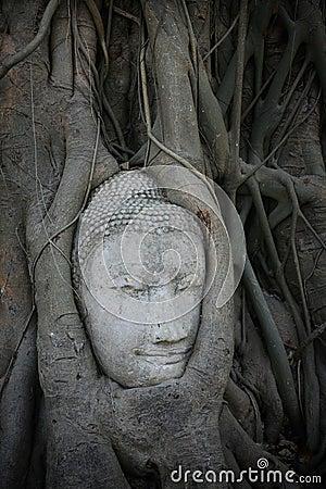 Free Sandstone Buddha Head In The Tree At Maha-tad Wat Stock Photography - 23181852
