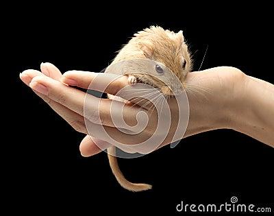 The Sandwort on a hand