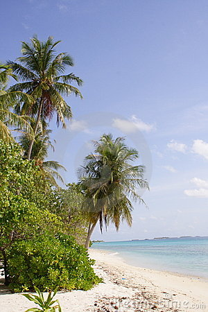 Sandy beach and palm trees