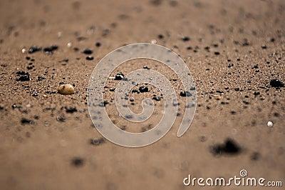 Sandy beach in Tuscany