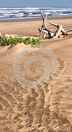 Free Sandy Beach With Drift Wood And Plants Royalty Free Stock Image - 104708016