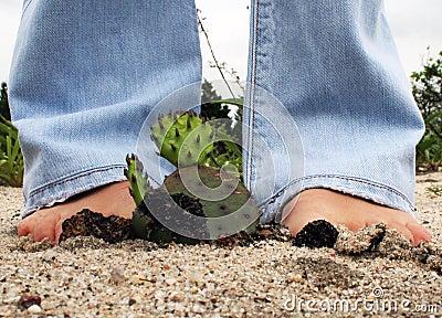 Sandy Cactus