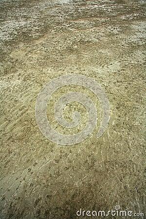 Sandy mud
