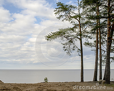 Sandy shore of the lake and pine cool spring day Stock Photo