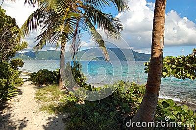Sandy trail on deserted island