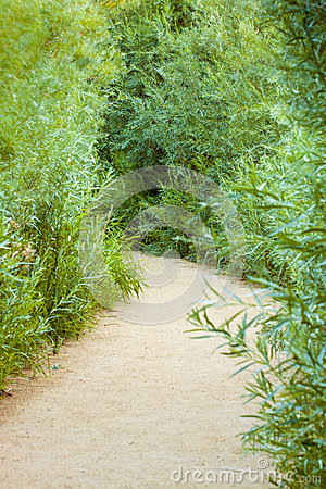 Sandy Vegetation Path