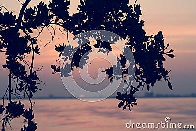 Sanibel wschód słońca