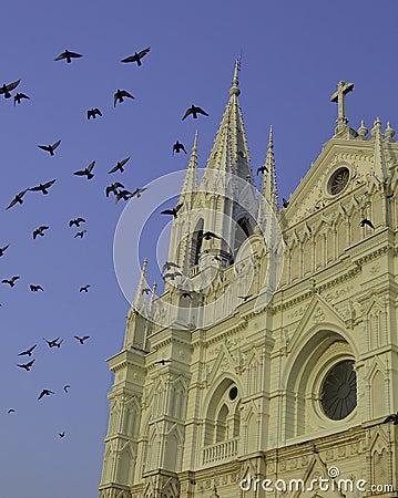 Free Santa Ana Covered In Birds Stock Photos - 36926533