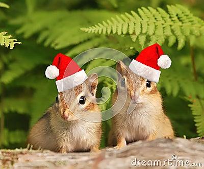 Santa Chipmunks Royalty Free Stock Photos Image 16542688