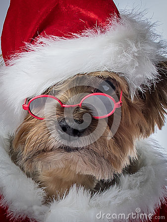 Free Santa Claus Dog- Christmas Dog With Glasses Royalty Free Stock Photos - 47844428