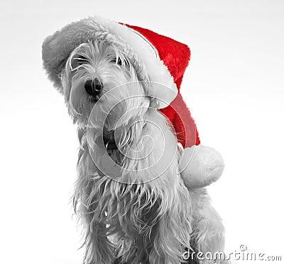 Santa Dog