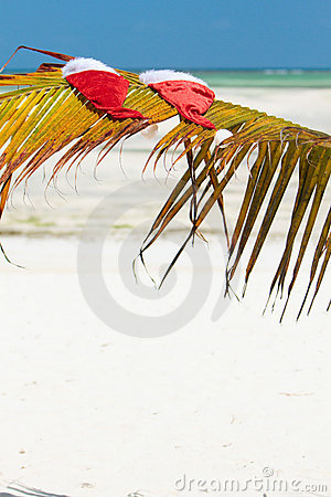 Santa hats on palm leaf