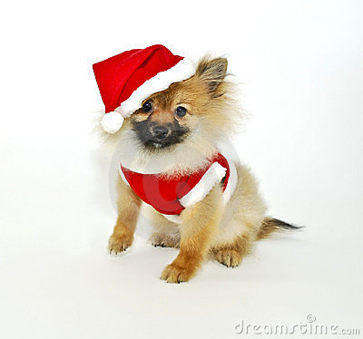 Santa Pom Puppy