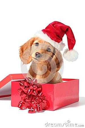 Free Santa Puppy Royalty Free Stock Photo - 3675895