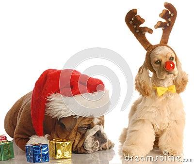 Santa and rudolph dog