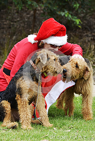 Free Santa S Little Helpers Woman In Santa Claus Costume & Two Big Dogs Royalty Free Stock Images - 55162959