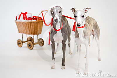 Santa whippets with christmas cart